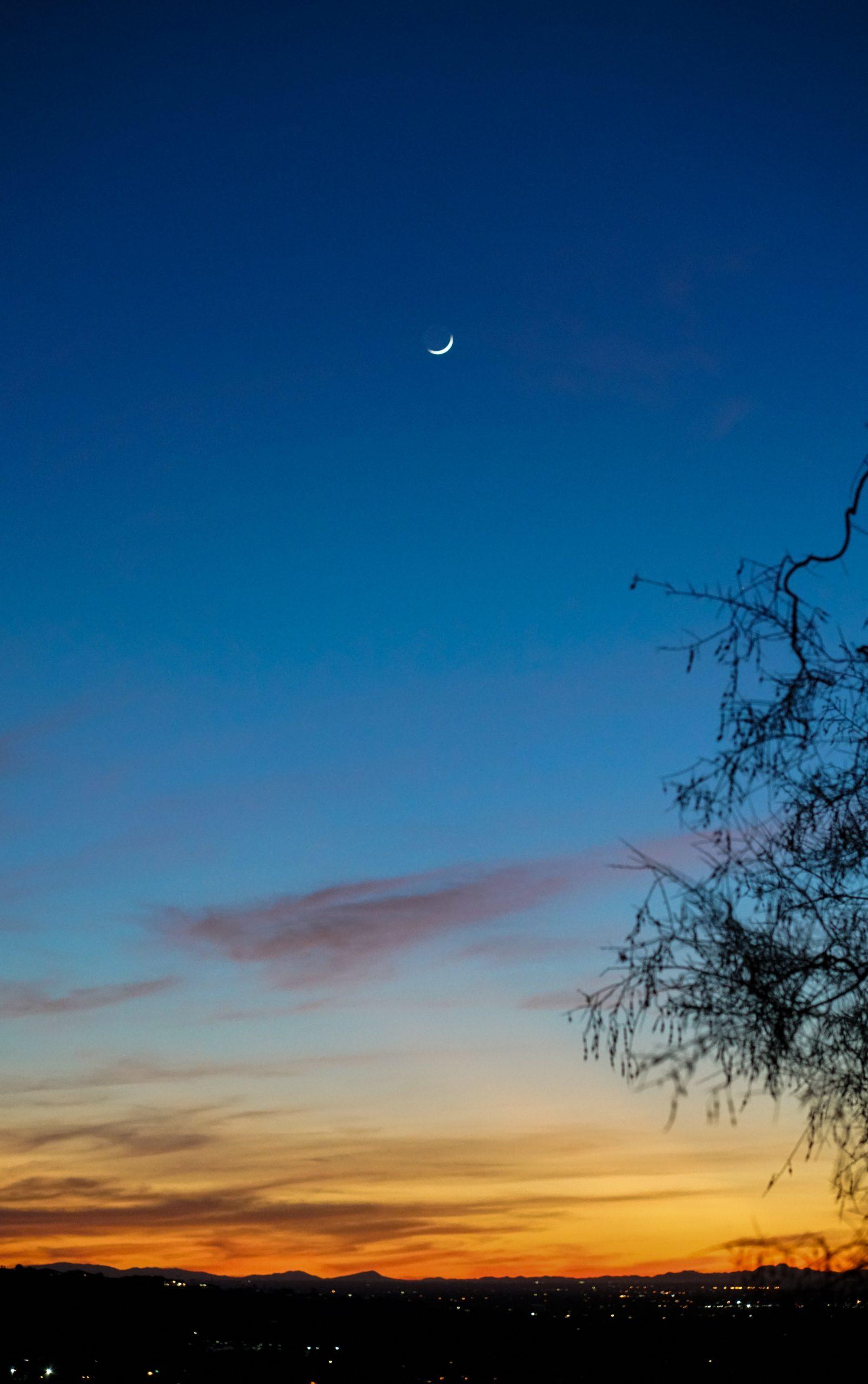 leafless tree under blue sky during daytime