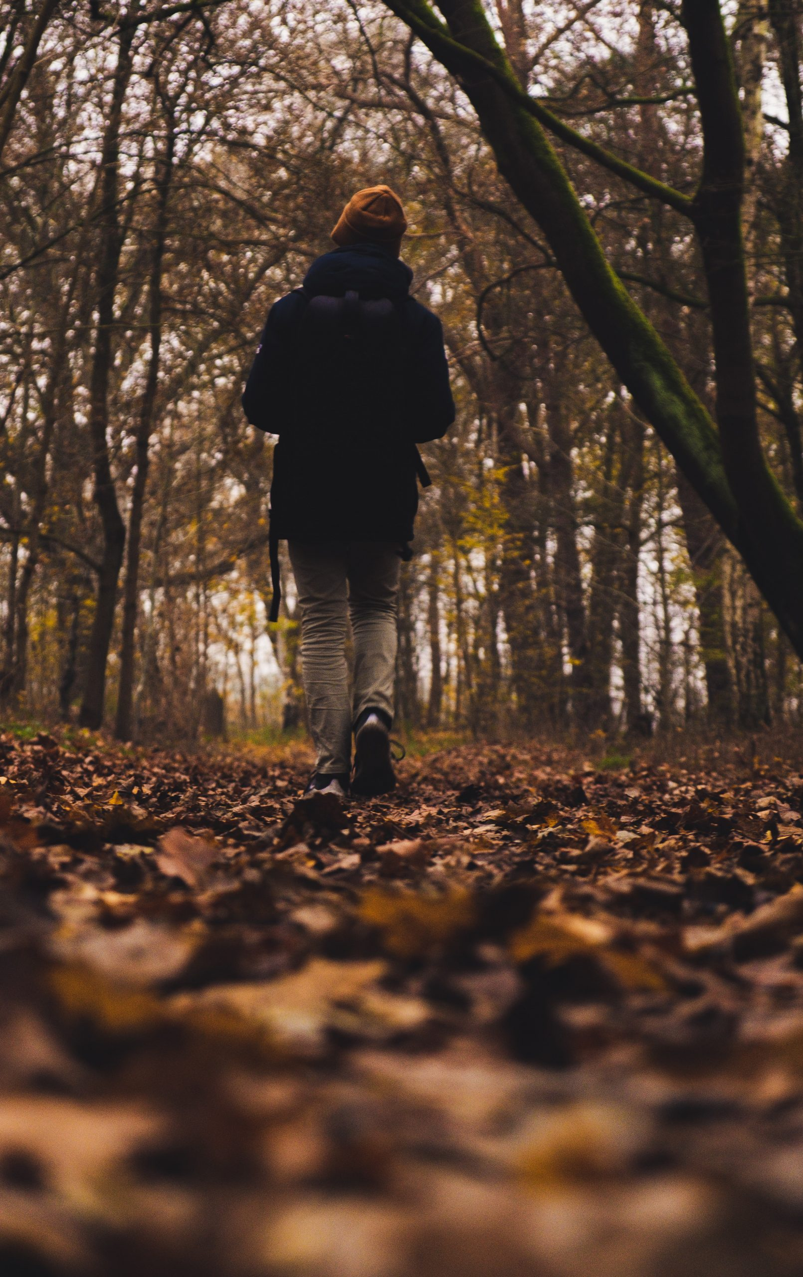 person walking in forest during daytime