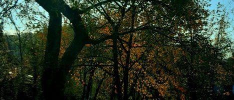 Copacii din Breaza și Moș Nicolae.